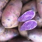 750-1.5-a1gsny-pomme-de-terre-ulysse